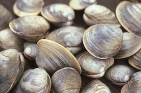 machiasport clam diggers
